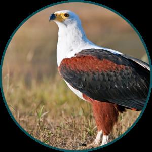 Bird image Briza Publications