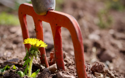 Get Springing: Jump start your garden this  spring with these 7 easy steps