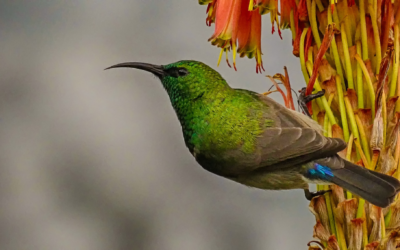 Get springing: Top plants, trees, and shrubs to attract birds to your garden